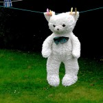 Teddy an Wäscheleine