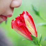 Person riecht an einer Blume