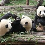 Pandas die Spielen