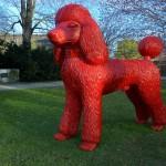 Große rote Pudel statur